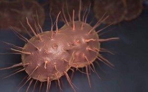 Gonorrhoeae