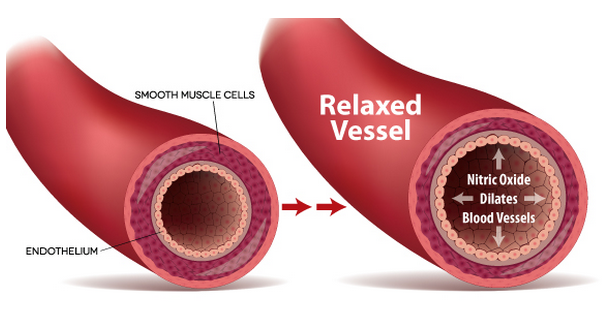 Effects of Viagra on Blood Vessels and Circulation